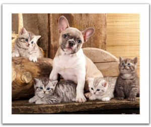 Pintoo: Little kittens and a dog (500) plastic puzzel