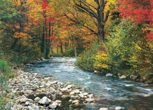 Eurographics: Forest Stream (1000) legpuzzel